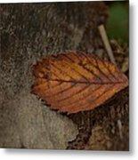 Fall Textures Metal Print