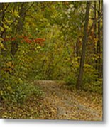 Fall Trail Scene 22 Metal Print