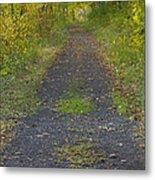 Fall Trail Scene 30  Metal Print