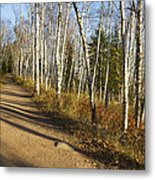 Fall Trail Scene 35 A Metal Print