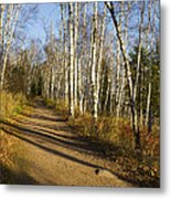 Fall Trail Scene 35 B Metal Print