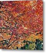 Fall Trees 18 Metal Print