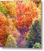 Fall Trees 3 Metal Print