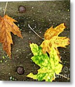 Fall Trio Metal Print