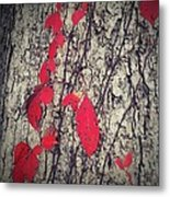 Fall Vines Metal Print