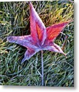 Fallen Autumn Leaf In The Grass During Morning Frost Metal Print