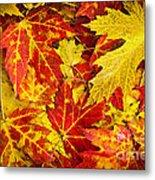 Fallen Autumn Maple Leaves  Metal Print