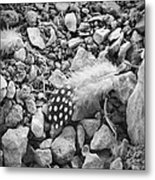 Fallen Feathers Black And White Metal Print
