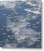 Fallen Leaves And Reflections Of Clouds Metal Print