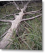 Fallen Pine Tree Metal Print