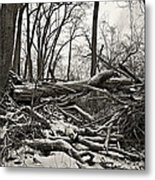 Fallen Soldiers Of The Forest Metal Print