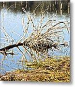 Fallen Tree Metal Print by Douglas Barnard