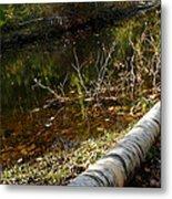 Fallen Tree Path Metal Print