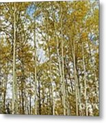 Falling For The Birch And Aspens Metal Print