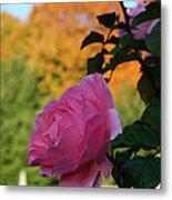 Fall's Final Rose Metal Print
