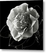 Fancy Camellia In Black And White Metal Print