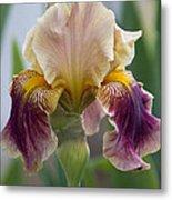 Fancy Iris Dance Ruffles Metal Print