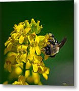 Fanfare For The Common Bumblebee Metal Print