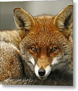 Fantastic Mr Fox Metal Print by Jacqui Collett