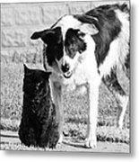 Farm Cat And Border Collie Metal Print by Thomas R Fletcher