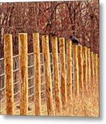 Farm Fence And Birds Metal Print