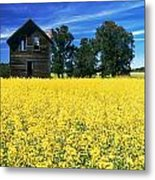 Farm House And Canola Field, Holland Metal Print