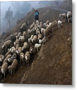 farmers bring their sheep to graze. Republic of Bolivia. Metal Print
