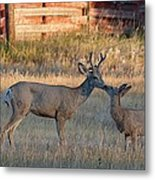 Father And Son Moment Metal Print