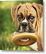 Fawn Boxer Puppy Metal Print by Jody Trappe Photography