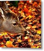 Fawn In Autumn Metal Print