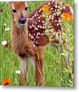 Fawn In Flowers Metal Print