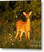 Fawn In Forest At Dusk Metal Print