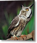 Fearful Owl Metal Print by Miguel Capelo