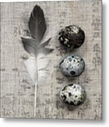 Feather And Three Eggs Metal Print