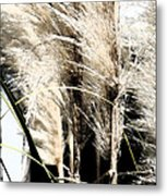 Feather Grass Metal Print