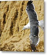 Feathered Friend Cruising Metal Print