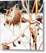 February Sunflower Metal Print