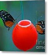 Feeding Butterflies Metal Print