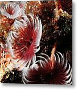 Feeding Feather Dusters Metal Print