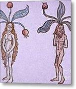 Female And Male Mandrake, Alchemy Plant Metal Print