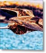 Female Frigate Bird Metal Print