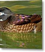 Female Wood Duck Metal Print