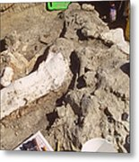 Femur Of Camarasaurus Covered Metal Print