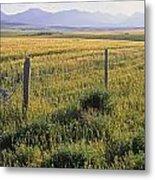 Fence And Barley Crop, Near Waterton Metal Print