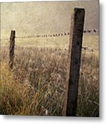 Fence And Field. Trossachs National Park. Scotland Metal Print