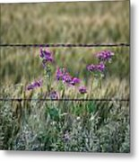 Fence And Flowers Metal Print