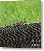 Fence Lizard Metal Print