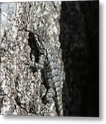 Fence Lizard Metal Print by Sean Green
