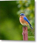 Fence Post Bluebird Metal Print
