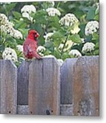 Fence Top Metal Print